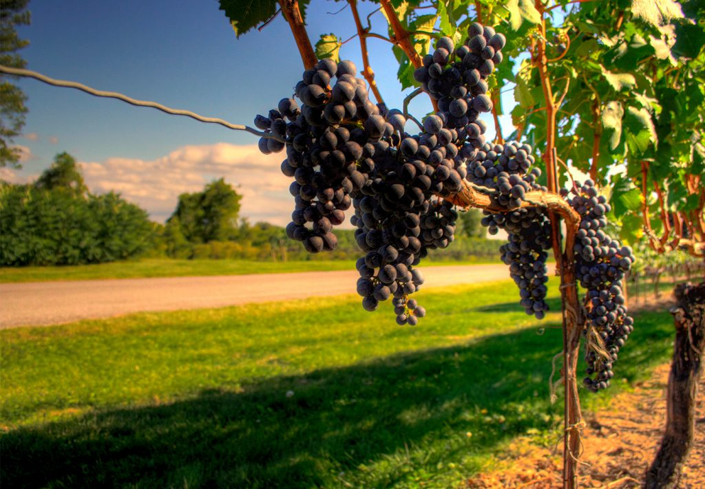 Federal government announces $475,000 towards tender fruit and fresh grapes research