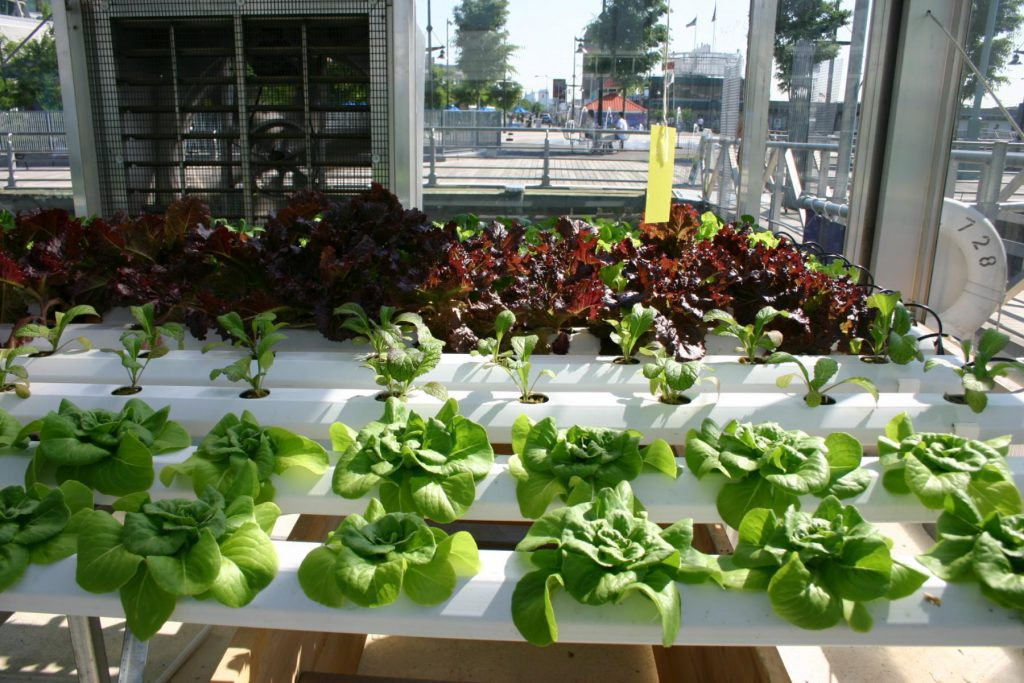 Large scale indoor farm to grow in Welland