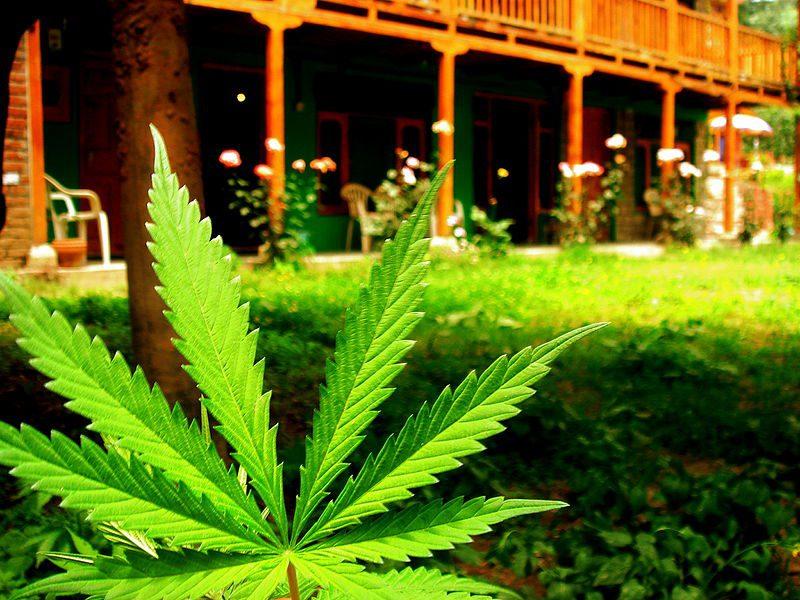 Grimsby marijuana greenhouse to create up to 80 jobs