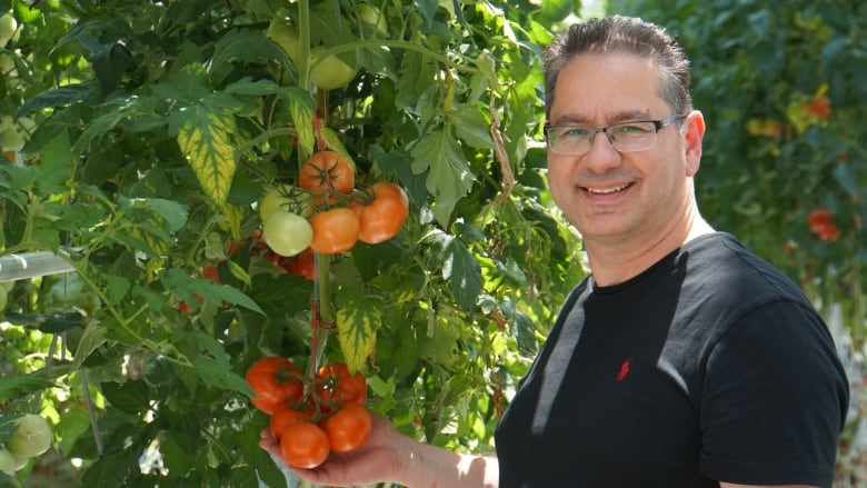Vineland Research developing new type of Ontario tomatoes