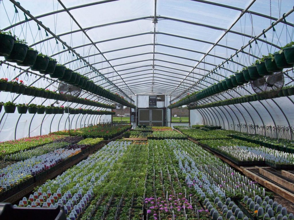 New funding for Greenhouse Technology Network